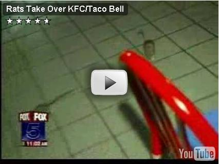 Rats In KFC