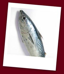 Tuna Food Safety