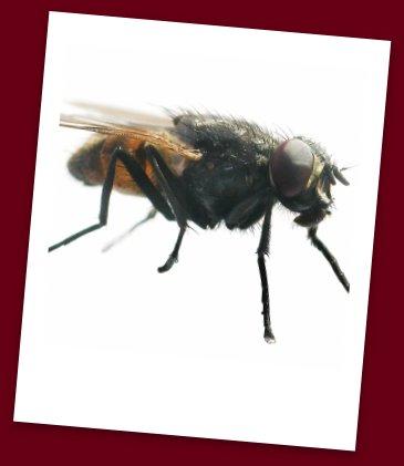 Pest Food Safety