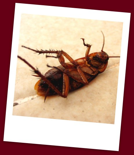 Roach Food Safety